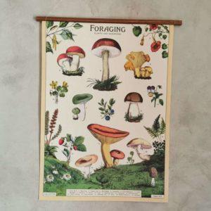 affiche-cavallini-champignons-comestibles