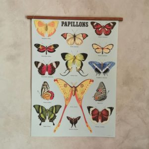 affiche-cavallini-papillon