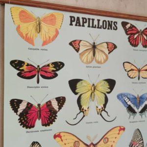 affiche-cavallini-papillon-chambre-enfant
