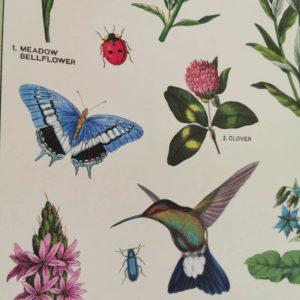 affiche-cavallini-pollinisateurs-chambre-enfant