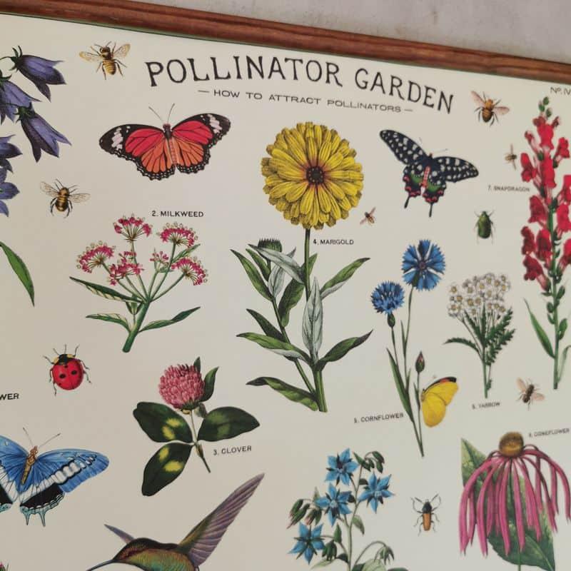affiche-cavallini-pollinisateurs-decoration