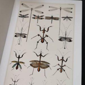seba-cabinet-de-curiosités-naturelles-livre-poster-deco