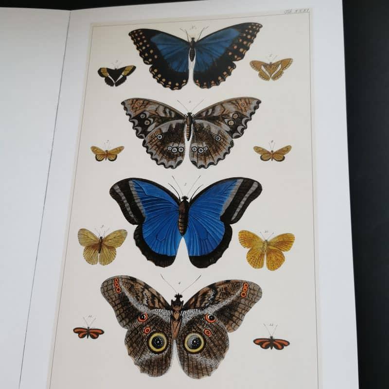 seba-cabinet-de-curiosités-naturelles-livre-poster-papillon
