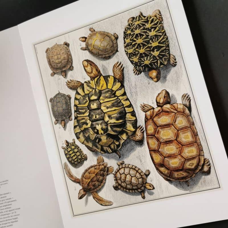 seba-cabinet-de-curiosités-naturelles-livre-poster-vintage