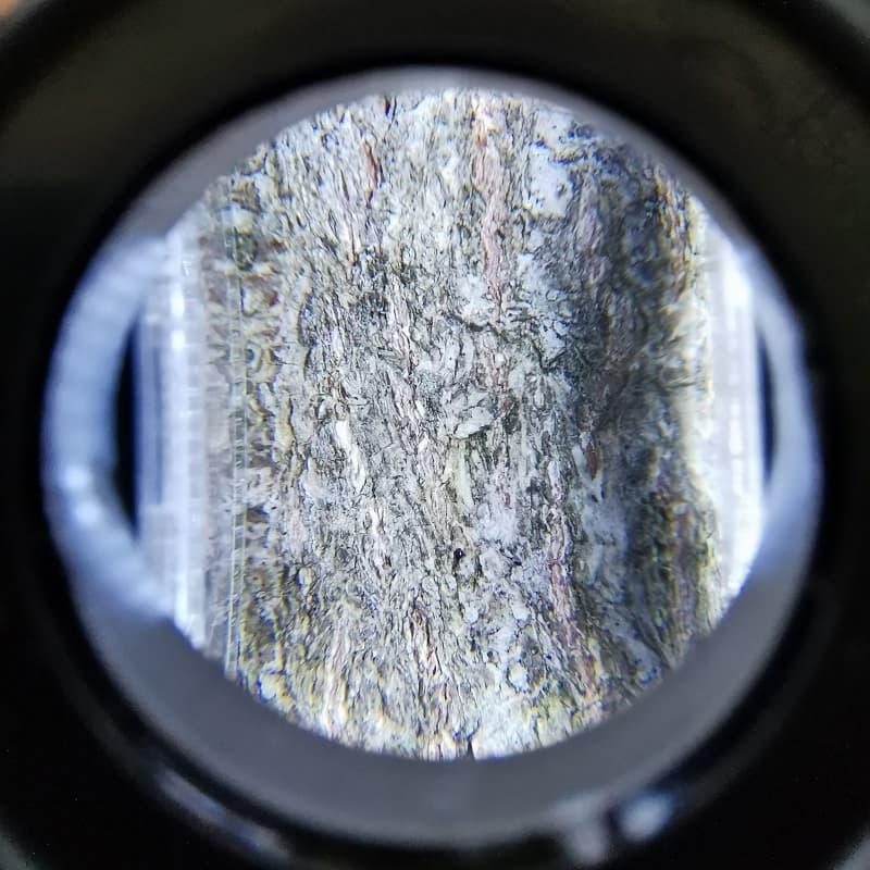 loupe-a-led-enfant-nature-arbre